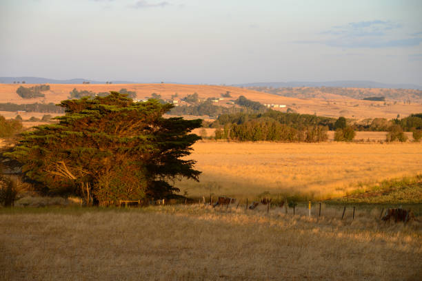 Colourful sunset and wild camping near Ross, Tasmania, Australia stock photo