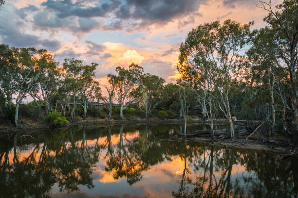 Colourful sunset with beautiful reflections over bank of Murray River, famous Australian tourist destination with eucalyptus gumtree bushes stock photo