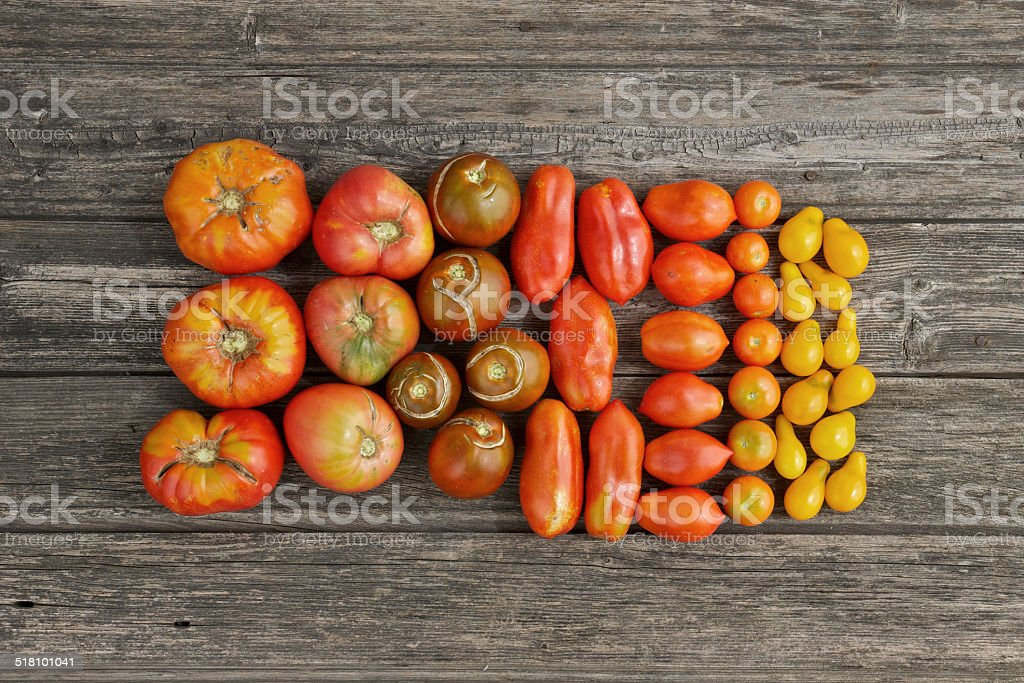 Colourful tomatoes from the home garden stock photo