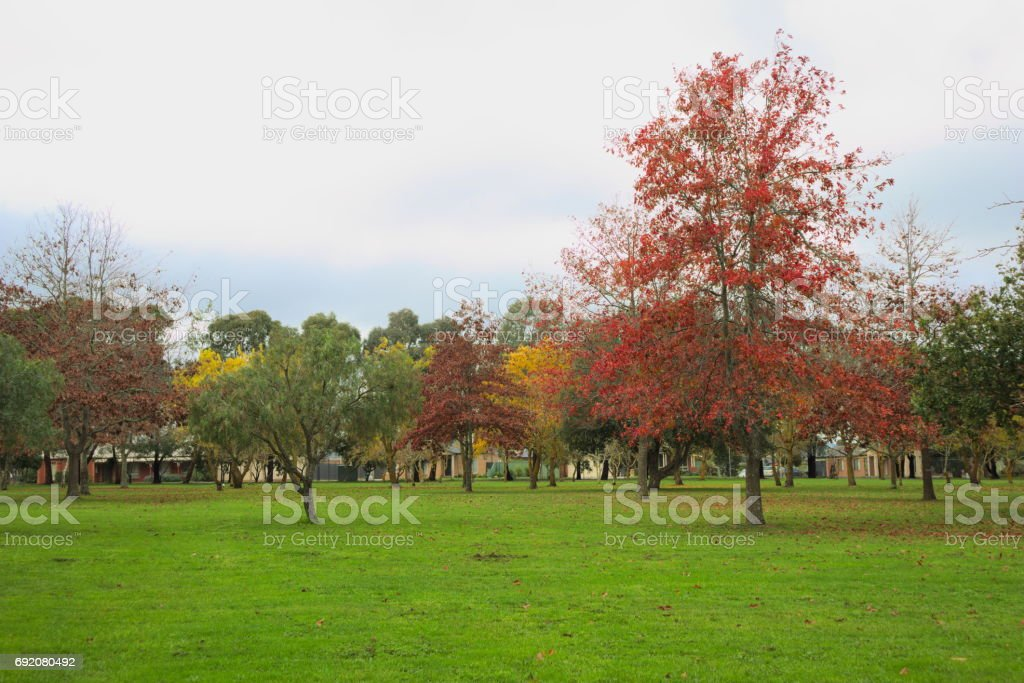 Colourful trees stock photo
