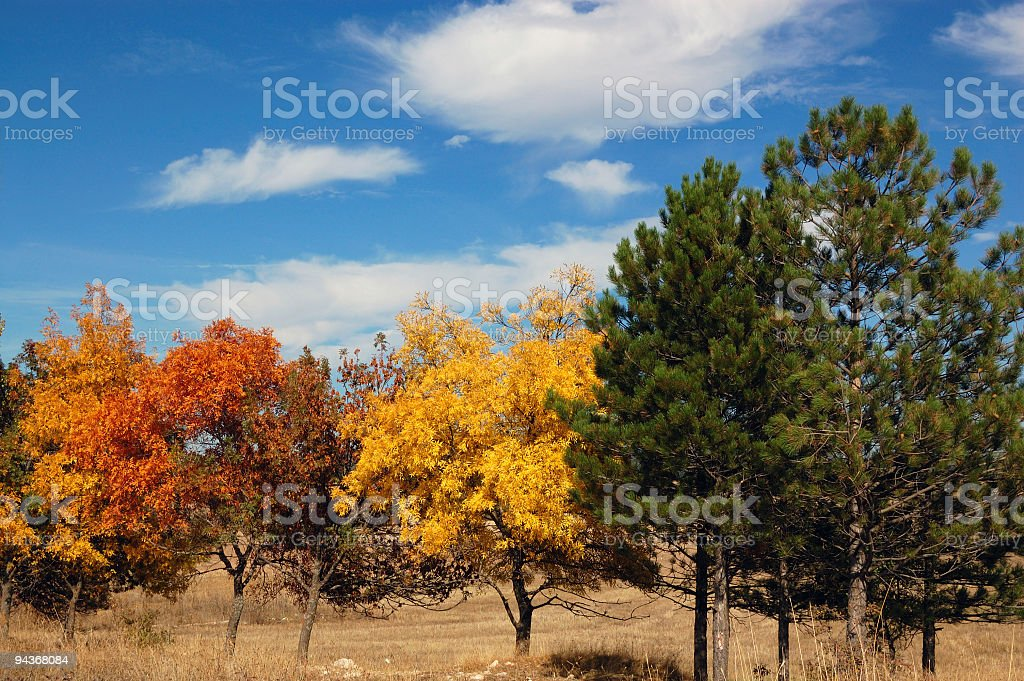Colourful Trees royalty-free stock photo