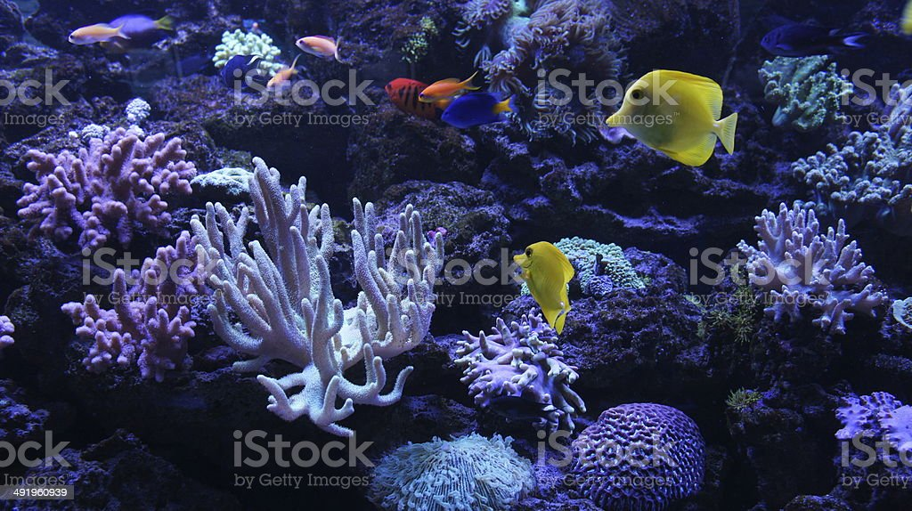 Colourful underwater world royalty-free stock photo