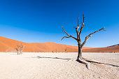 istock Colourfull lonely tree in dunes, Sossusvlei Desert, Dead Vlei, Namibia 1202285564