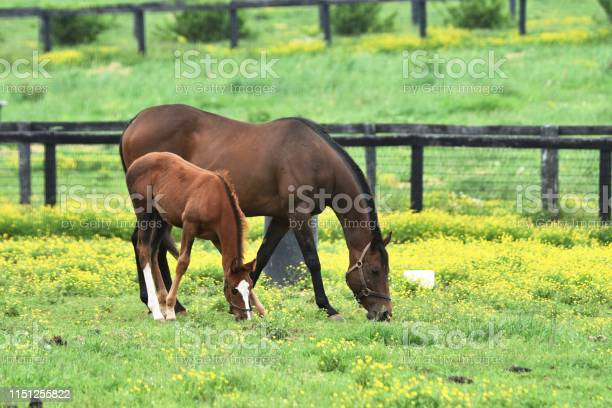 Photo of Colt and Mare