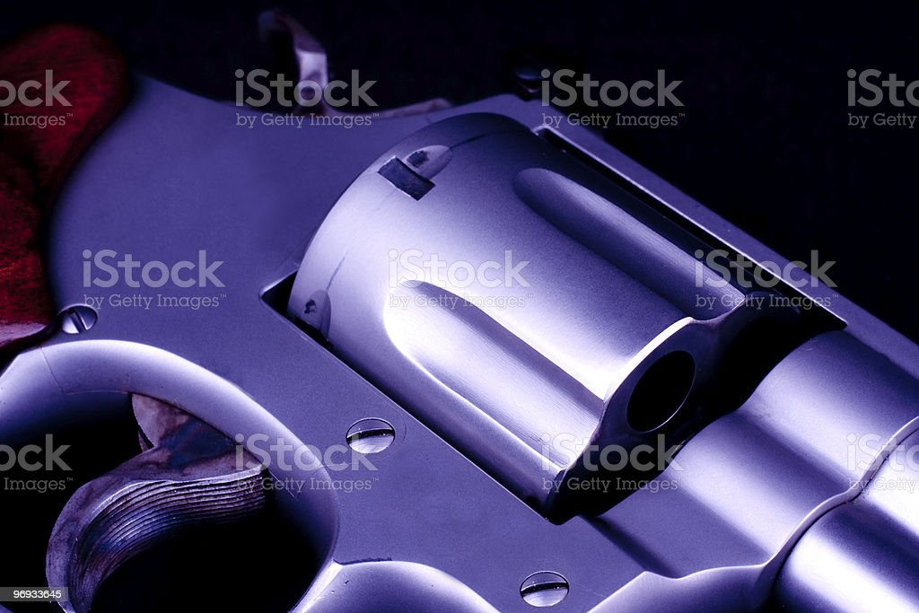 colt royalty-free stock photo