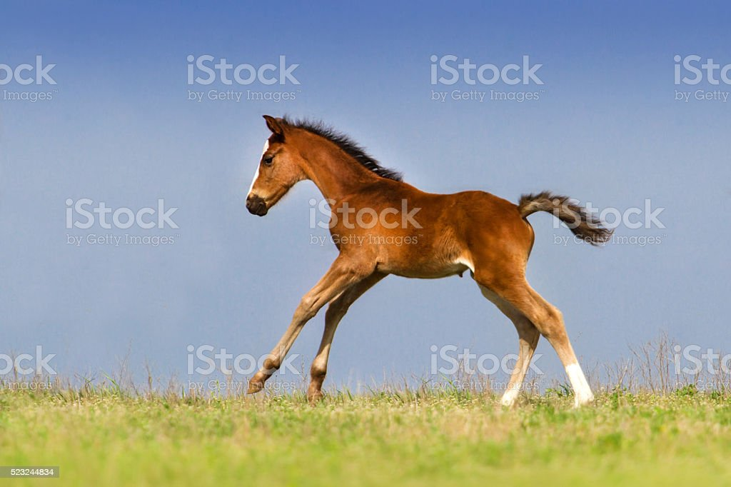 Colt run stock photo