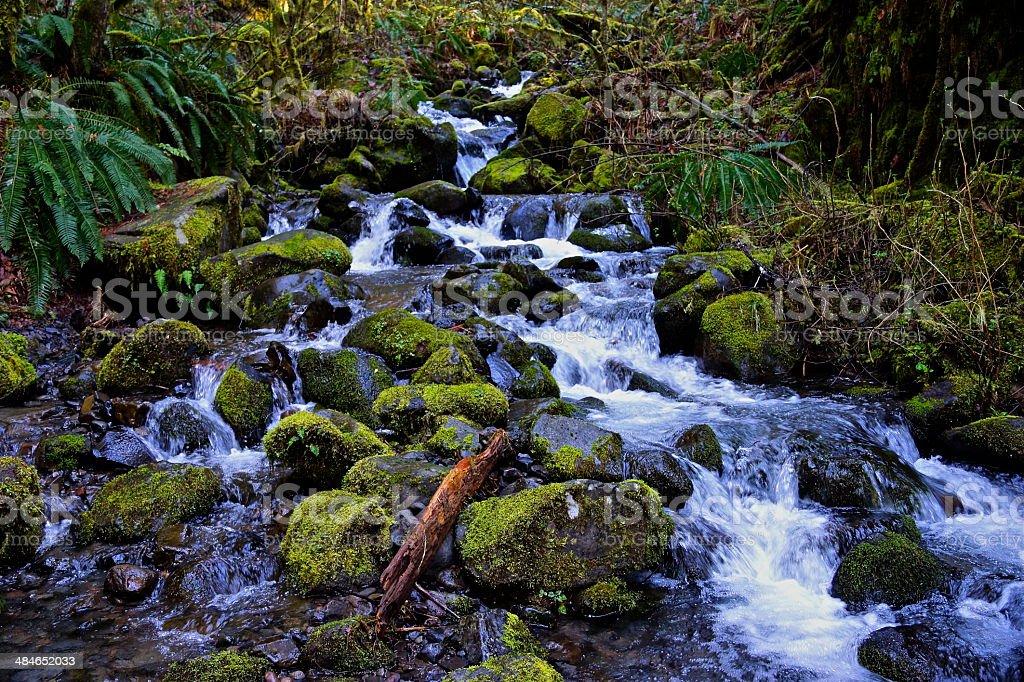 Columbia Gorge Creek stock photo