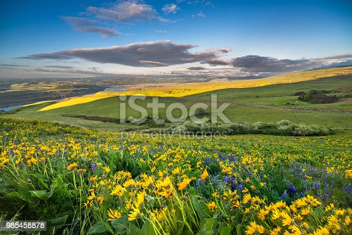 Springtime, Washington State, Columbia - Oregon, Dusk, Field