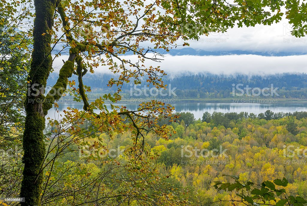 Columbia River and Autumn Forest with Fog royalty-free stock photo