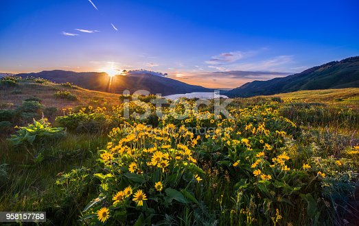 Springtime, River, Sunset, Meadow, Oregon - US State