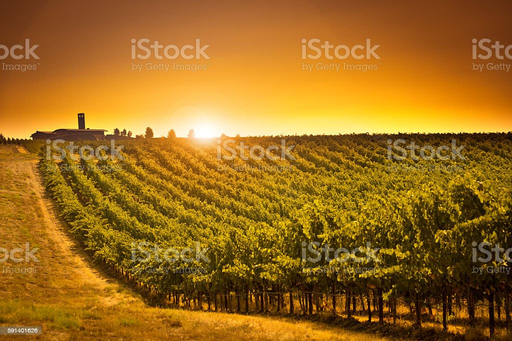 Columbia Valley Vineyard Winery Landscape of Washington State USA stock photo