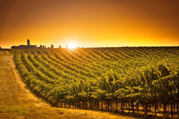 Columbia Valley Vineyard Winery Landscape of Washington State USA - foto de acervo