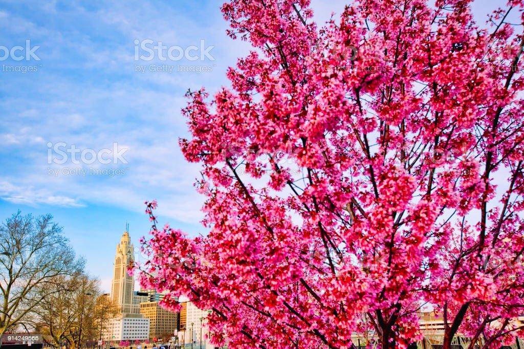 Columbus, Ohio skyline in the spring stock photo