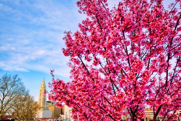 columbus, ohio manzarası bahar - columbus day stok fotoğraflar ve resimler