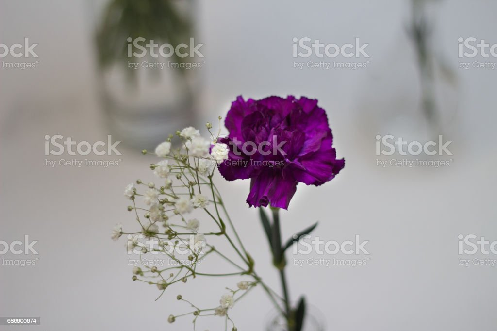 Combination Of White and Purple Flowers royalty-free stock photo