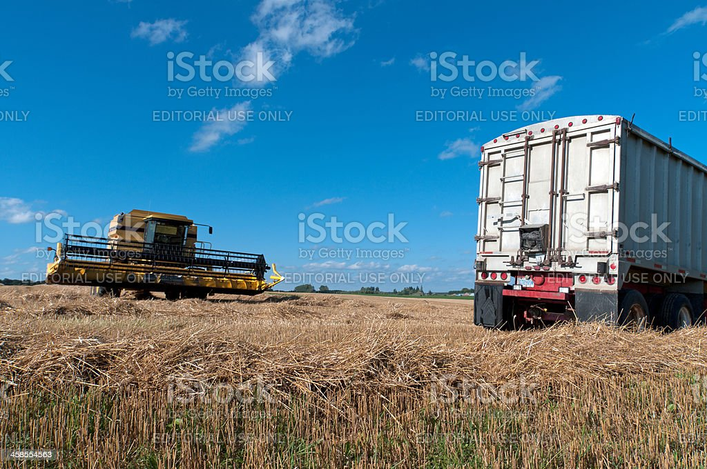 Combine and Truck in Wheat Field stock photo