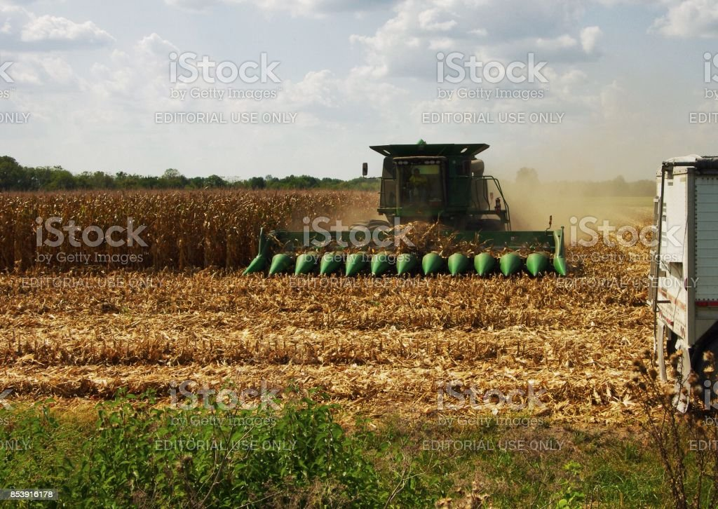 Combine cuts down rows of corn stalks in Illinois during fall harvest stock photo
