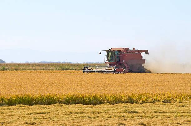 Combine cutting rice in Sacramento. stock photo