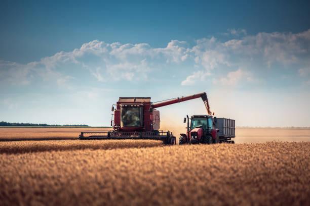 combine harvester agriculture machine harvesting golden ripe wheat field - zbierać plony zdjęcia i obrazy z banku zdjęć