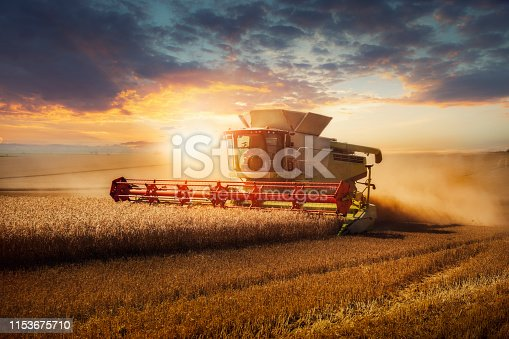 Combine harvester at gold light in agriculture fields with wheat.