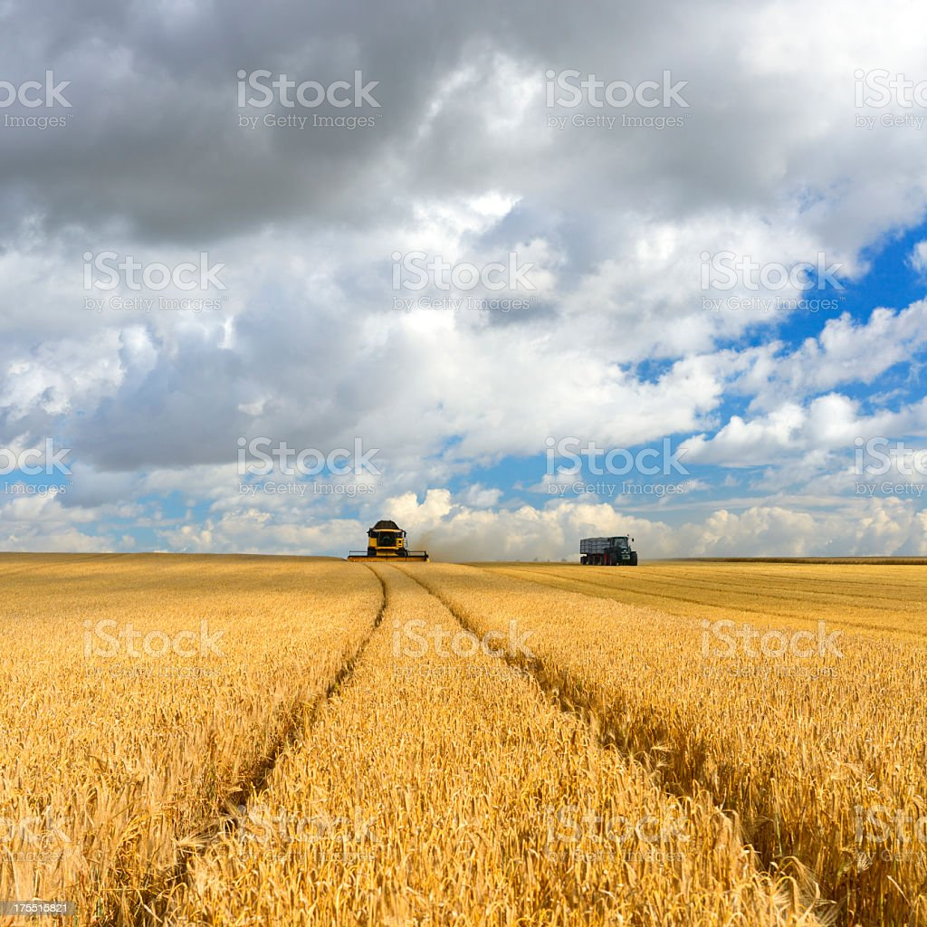 Combine Harvester Cutting and Tractor in Summer Field during Harvest stock photo