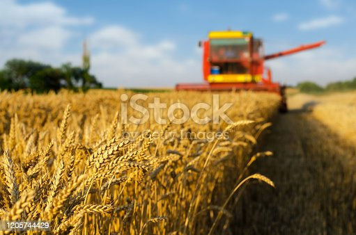 Combine harvester harvesting wheat on a sunny summer day.
