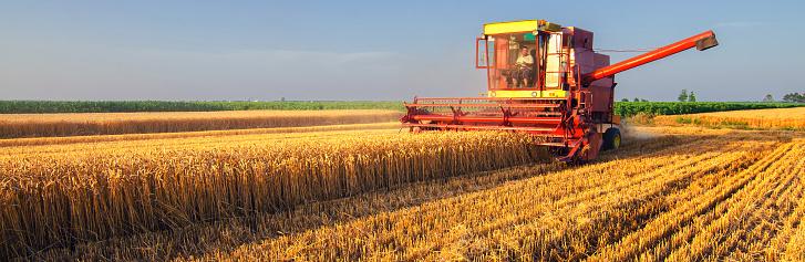 istock Combine harvester harvesting wheat 978721250