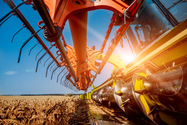 Combine harvester in action on wheat field. Process of gathering a ripe crop. stock photo