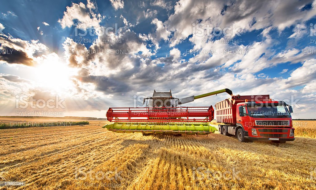 Combine harvester in action on wheat field, unloading grains stock photo