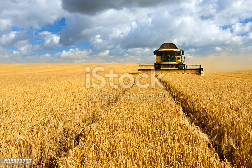 Combine harvester cutting crops in barley field during harvest under dramatic cloudy sky