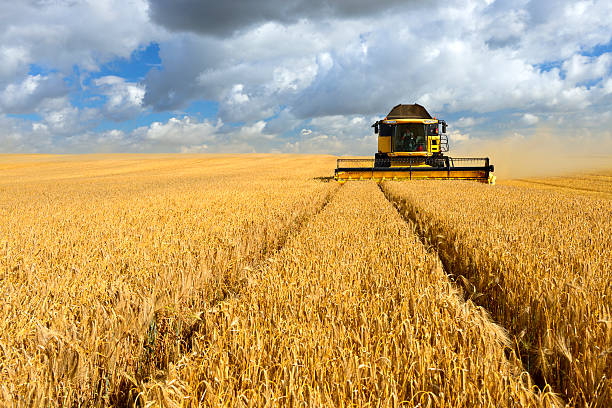 combine harvester in barley field during harvest - barley stock pictures, royalty-free photos & images