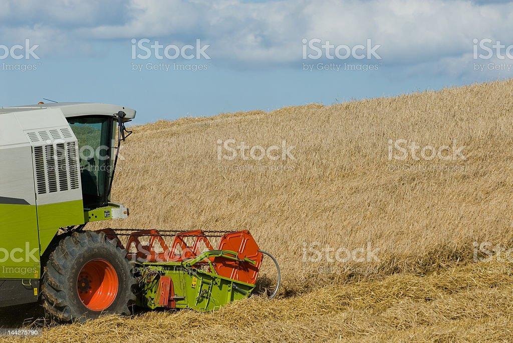 Combine harvester in the corn field stock photo
