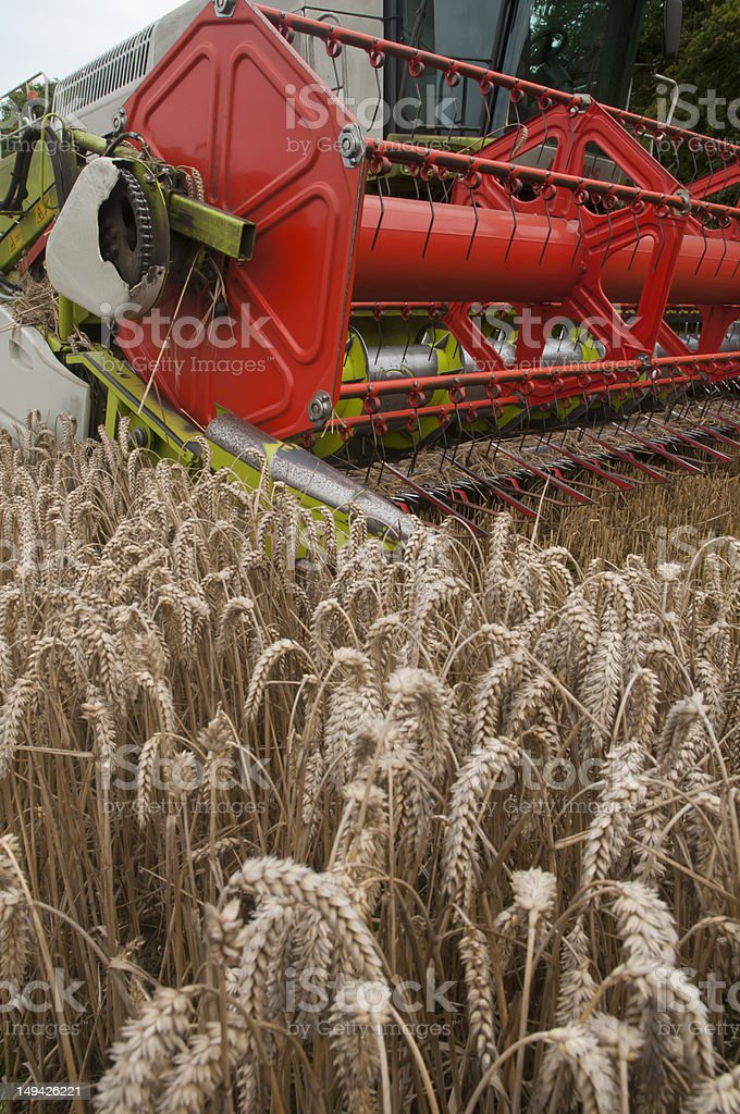 combine harvester in wheat fields stock photo