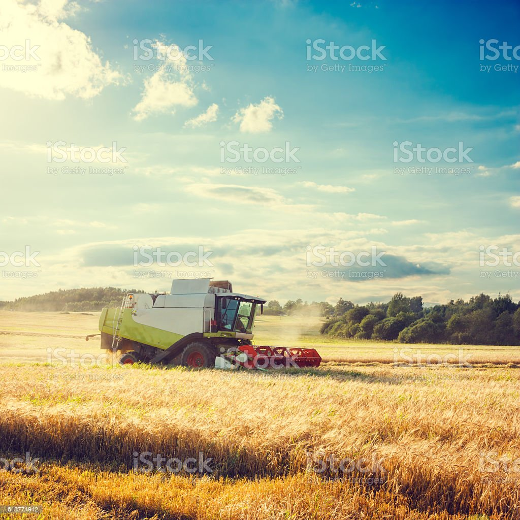 Combine Harvester on a Wheat Field. Agriculture. stock photo