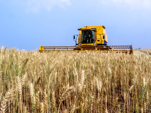 Combine harvester on a wheat field, in Parana State, south of Brazil stock photo