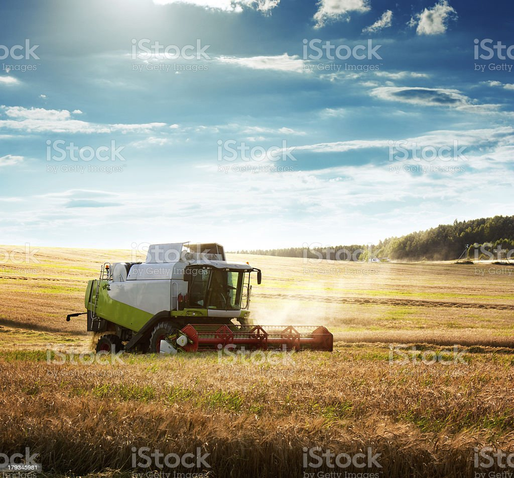 Combine Harvester on a Wheat Field stock photo