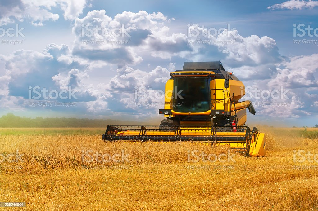 Combine harvester on a wheat field. stock photo
