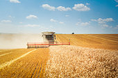 Combine harvester on wheat field, natural daylight.