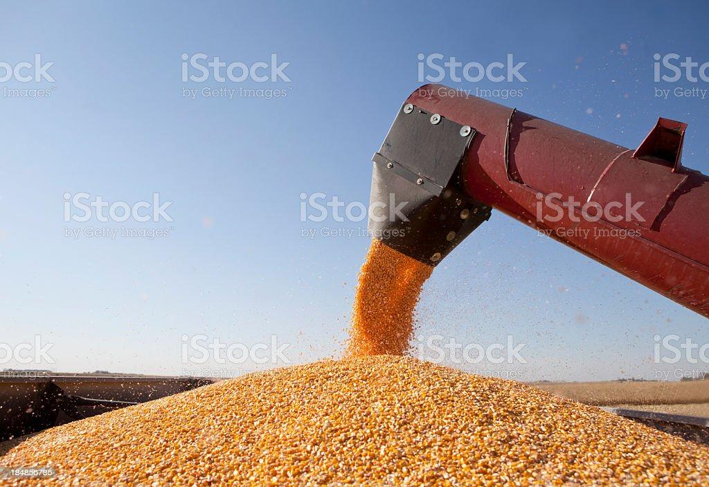 Combine Harvester Transferring Corn to Grain Trailer. royalty-free stock photo