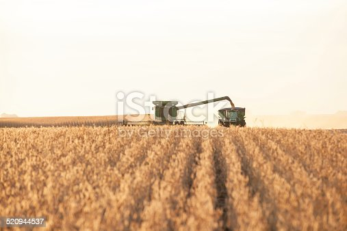 Combine harvester (soybeans) unloading into a grain cart on the go.