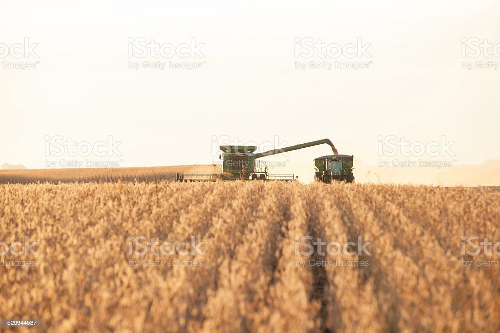 Combine Harvester Unloading into Grain Cart stock photo
