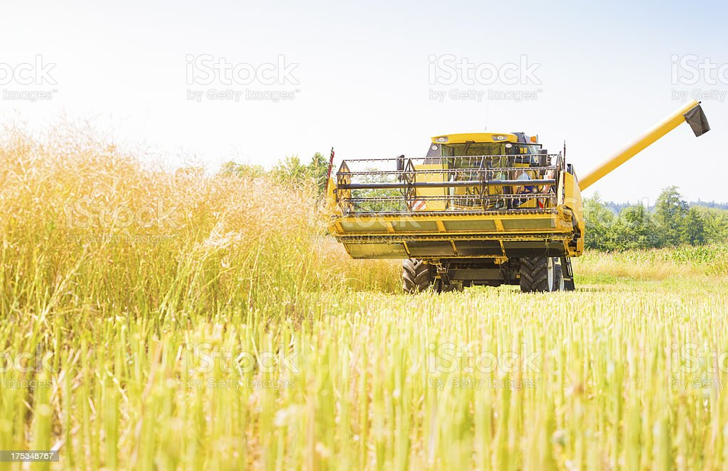 Combine harvester working in field royalty-free stock photo