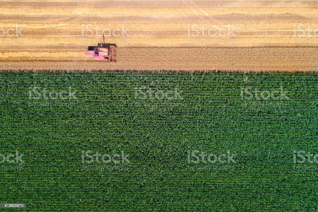 Combine harvester working in wheat field stock photo