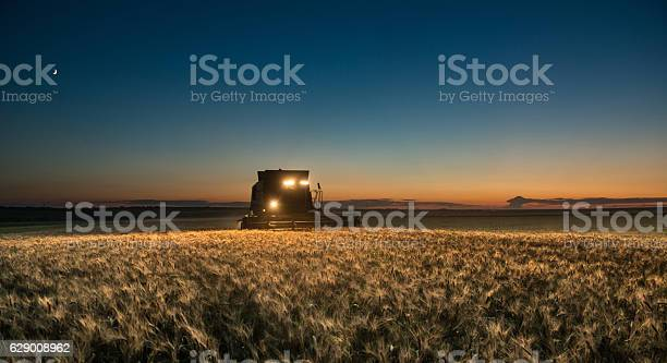 Photo of Combine harvester working on a wheat crop at night