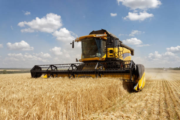 Combine harvester working on a wheat field Combine harvests wheat on a field in sunny summer day agricultural equipment stock pictures, royalty-free photos & images