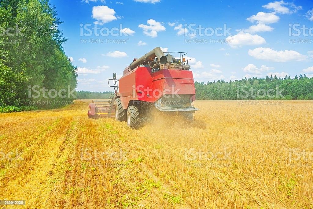 combine harvester working on wheat field rear view stock photo