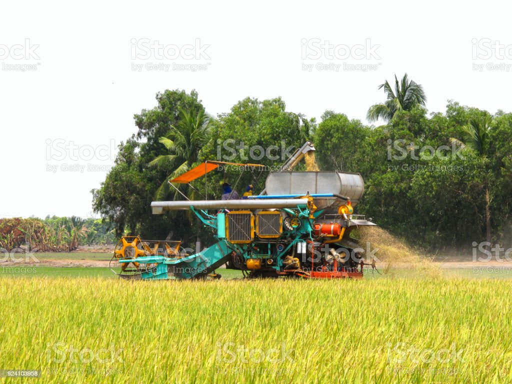 Combine Harvesters Cutting rice stock photo