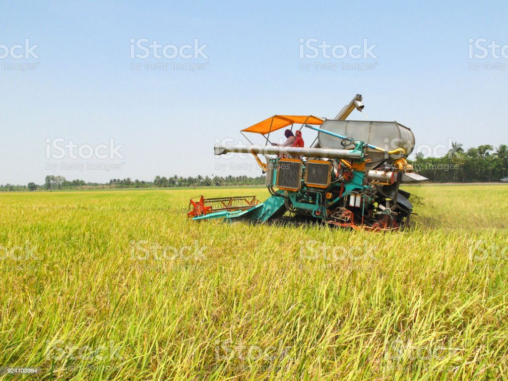 Combine Harvesters Cutting Wheat field stock photo