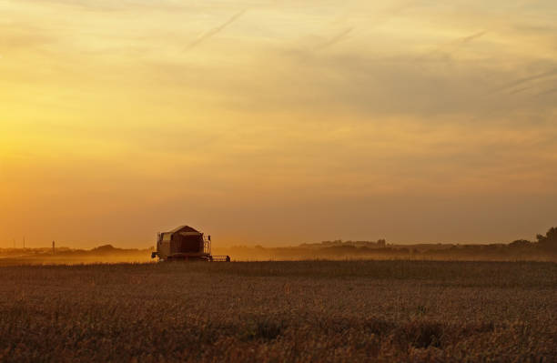 Combine harvesting cereals at sunset stock photo