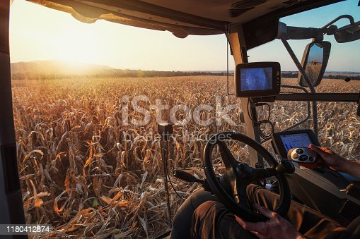 View from inside of combine harvesting machine. Unrecognizable person driving combine and harvesting corn at sunset.